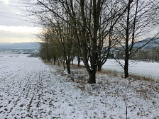 Hecke Landschaft Winter